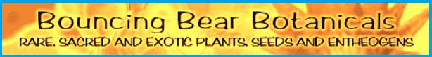 natural healing plants shop