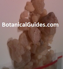 what frankincense resin looks like