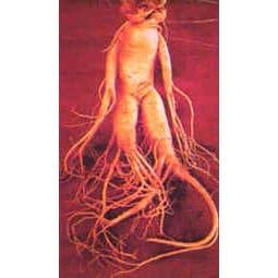 buy panax ginseng root