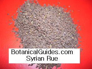 Peganum harmala seeds