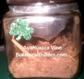 ayahuasca vine shredded