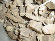 mandrake plant material