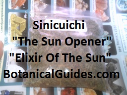 sinicuichichi for sale