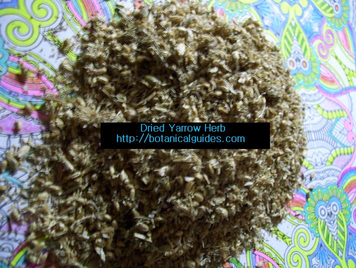 dried yarrow herb