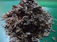 chopped ginkgo leaf