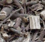 Alchornea floribunda